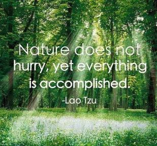 Nature-Quote-by-Lao-tzu.jpg