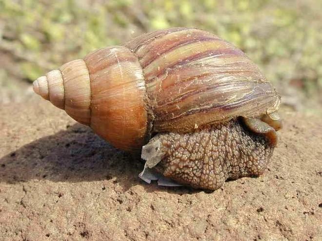 Snail pace (2)
