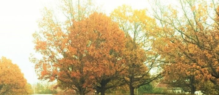 autumn-for-wp-3