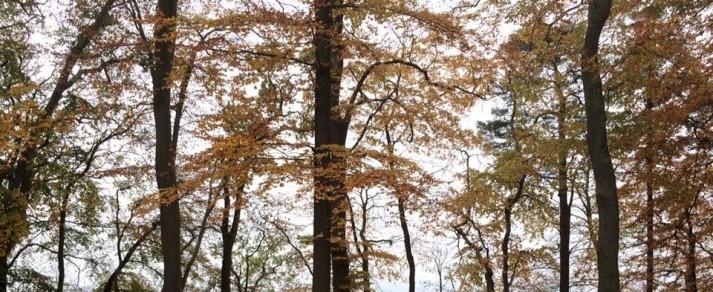 fall-again-2