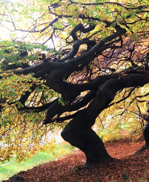 Spooky tree (3).jpg