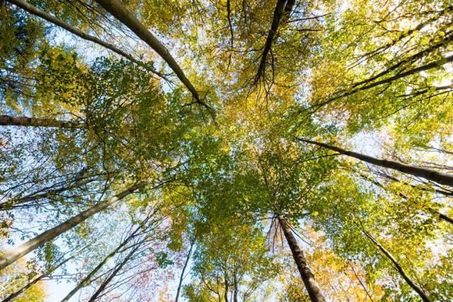 wp-autumn-photo