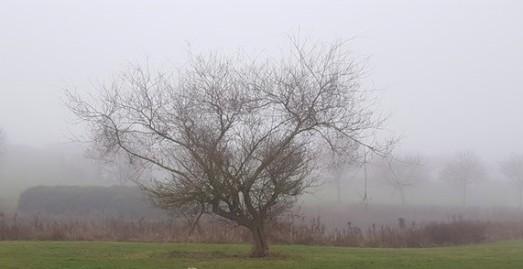 wp-photo-foggy-2