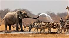 *Namibia National Park*