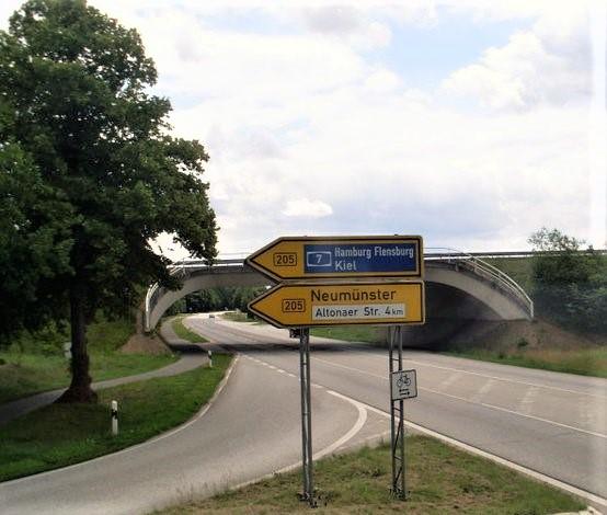 bridge 7 (2)