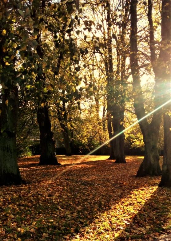Morning glow.jpg