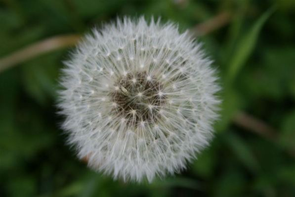flower 9