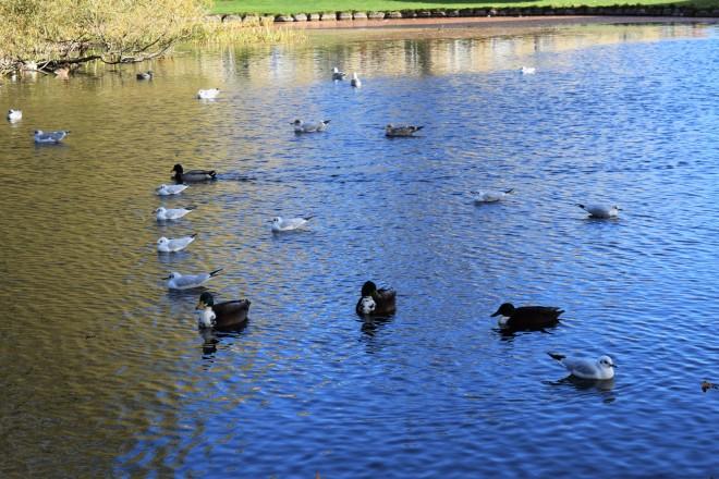 ducks 8.JPG