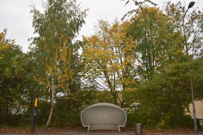 fall 2 (2).JPG
