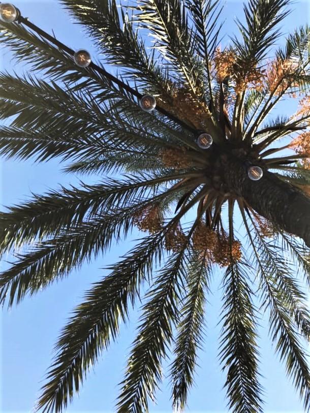 palm (2)