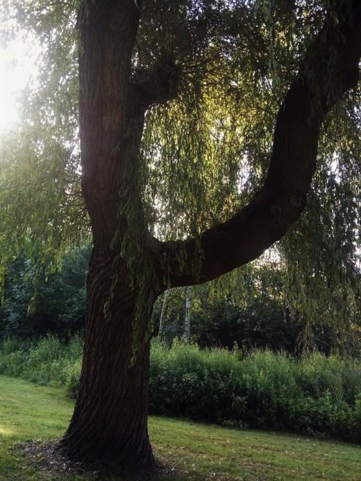 tree FB (2)