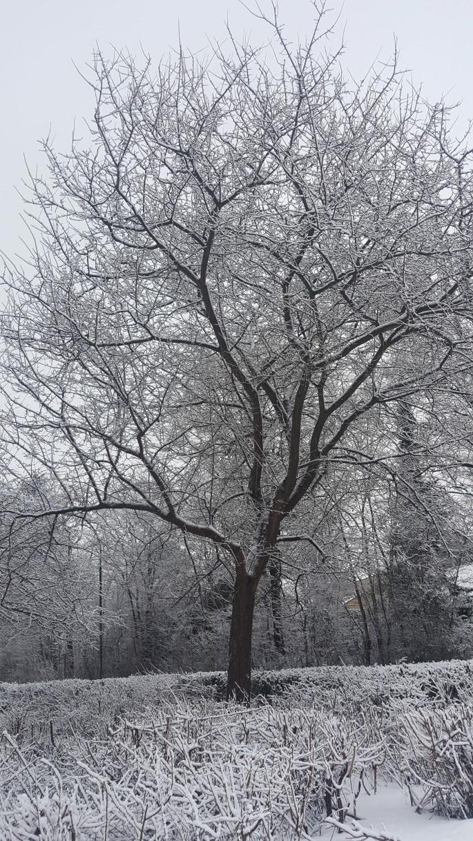 snowtime 16.jpg